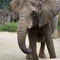 taipei zoo 20