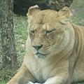 taipei zoo 23