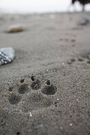 環島-台東沙灘