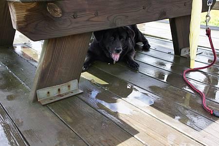 環島-看金針躲桌下