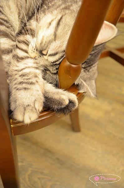 貓咪先生的朋友 030