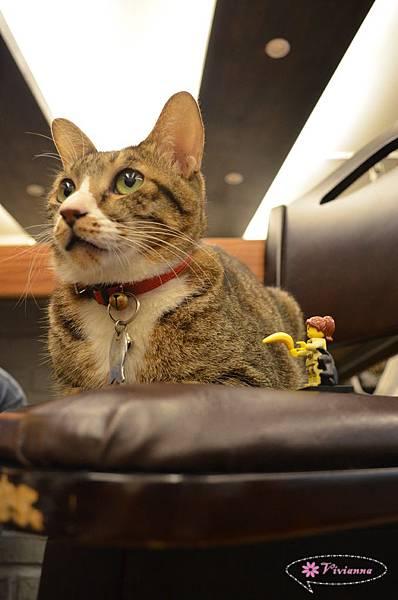 貓咪先生的朋友 041