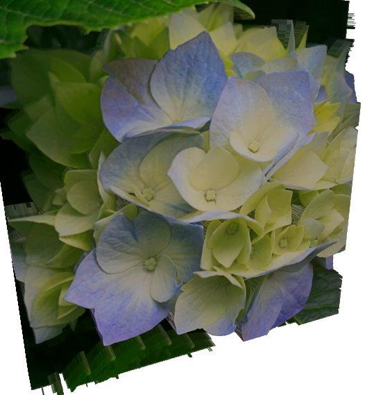 flower_3d