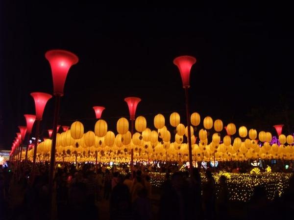 黃燈籠海.JPG