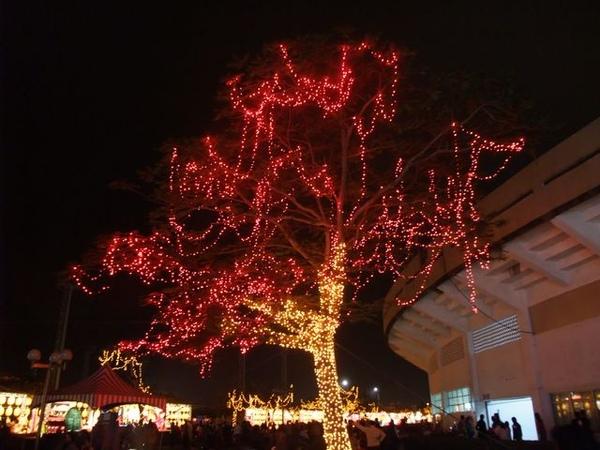 漂亮的燈樹.JPG