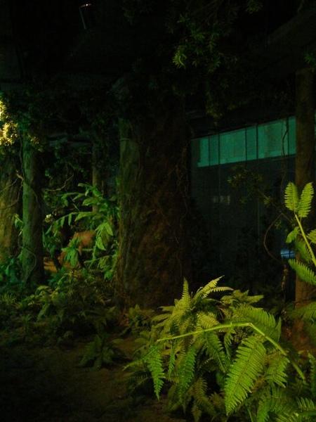 台塑文化紀念館-真的有森林的感覺.JPG