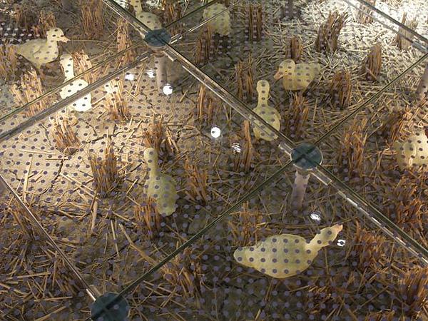 蘭陽博物館-透明養鴨地板.JPG