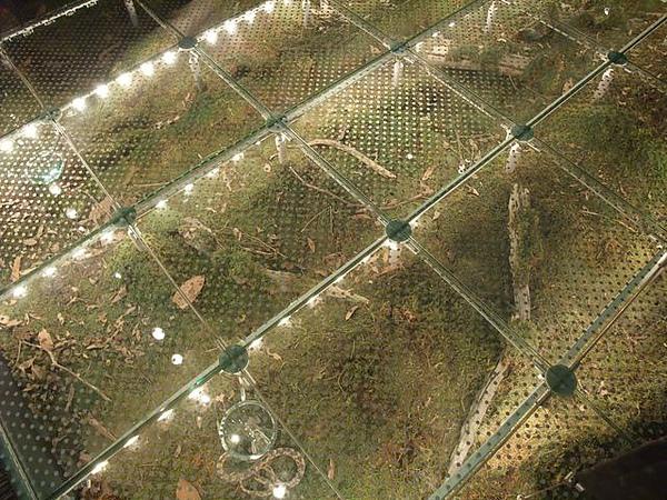 蘭陽博物館-透明森林地板.JPG