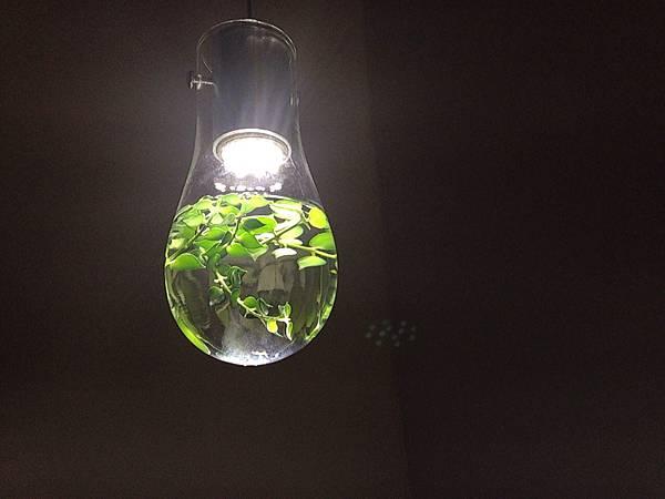 洗手台上的燈泡與植物