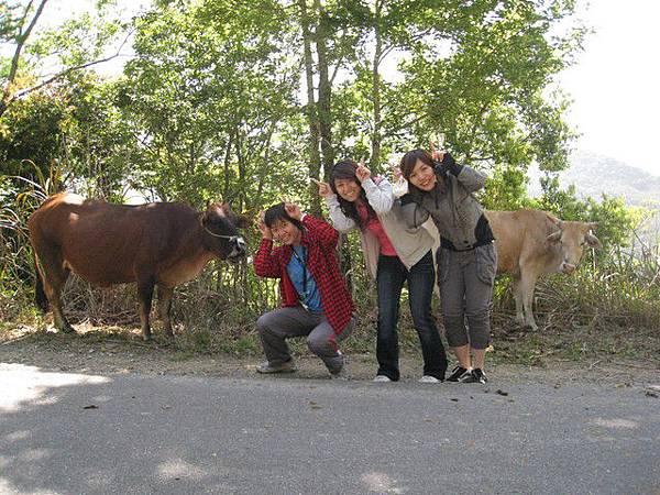 牛年當然要跟牛拍照