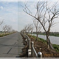 舊濁水溪河道的景色