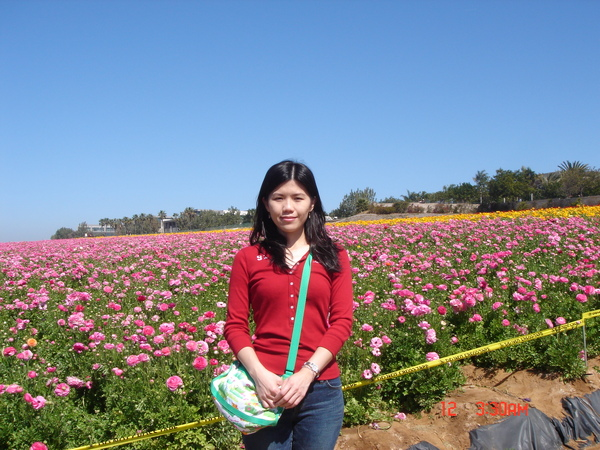 the flower field 6.JPG