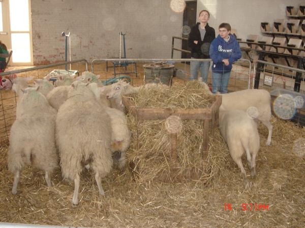 a farm in Cornell 6.JPG