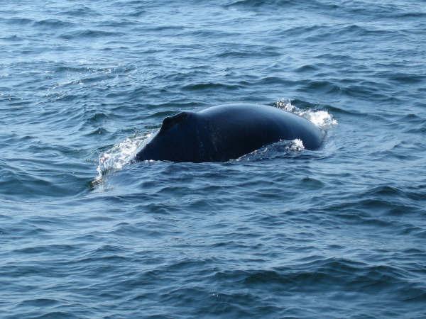 whale 5.jpg