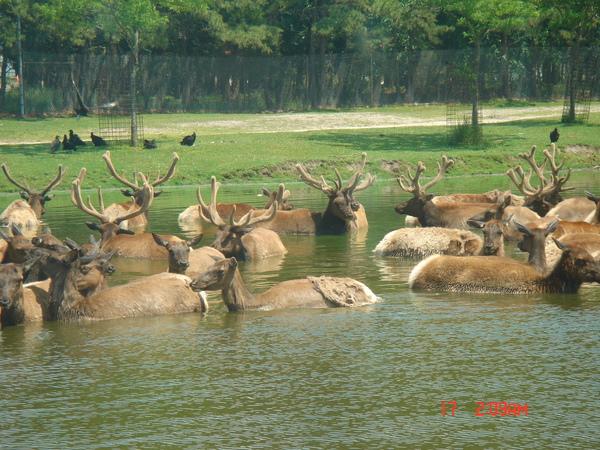 Wild Safari 4.JPG