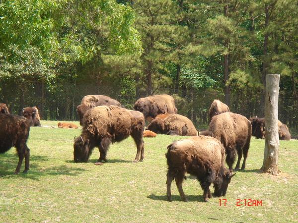 Wild Safari 6.JPG