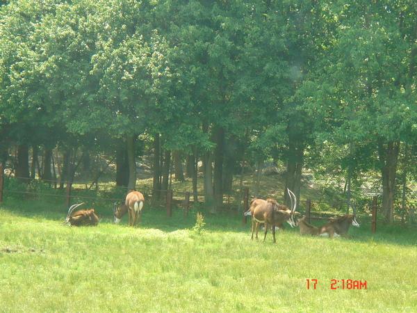 Wild Safari 8.JPG
