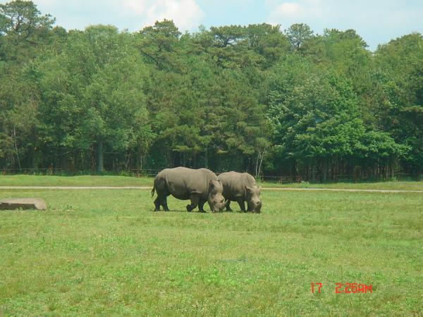 Wild Safari 10.JPG