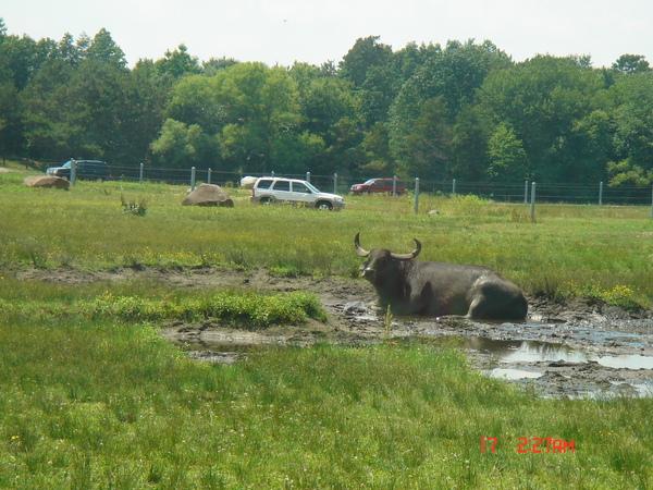 Wild Safari 11.JPG