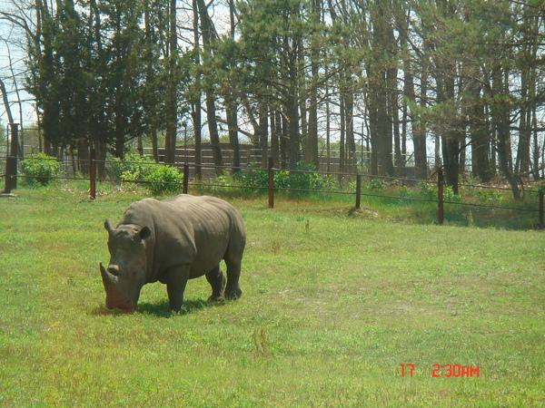 Wild Safari 12.JPG