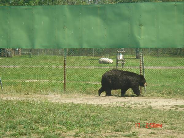 Wild Safari 25.JPG