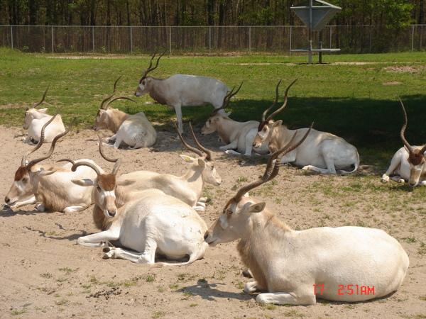 Wild Safari 24.JPG
