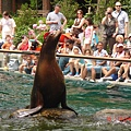 sea lion in Central Park Zoo 4.JPG