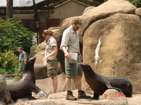 sea lion in Central Park Zoo 6.JPG
