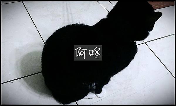 IMAG0068-1_調整大小01
