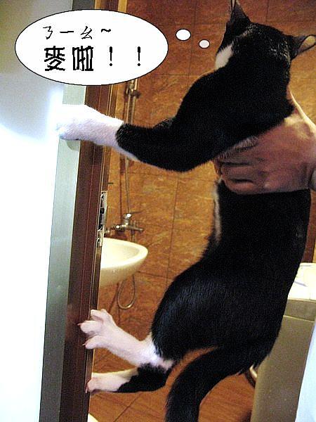 2010-09-23-ㄋ一ㄠ~我不要洗澡!!