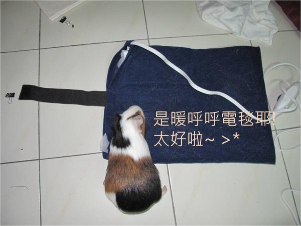 wiwi愛電毯.jpg