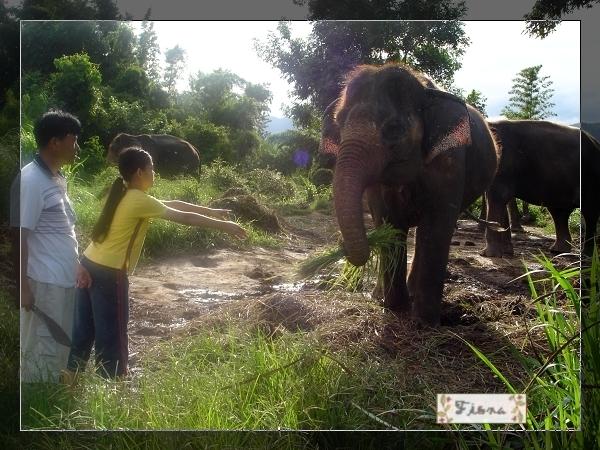 在跟大象拔河。