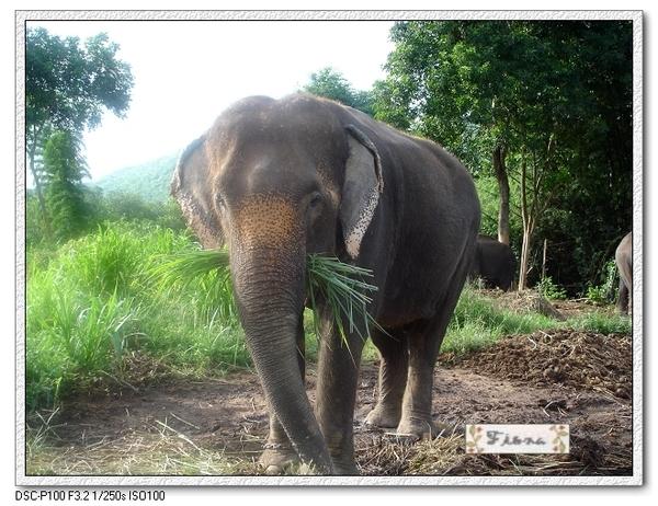 大象好可愛