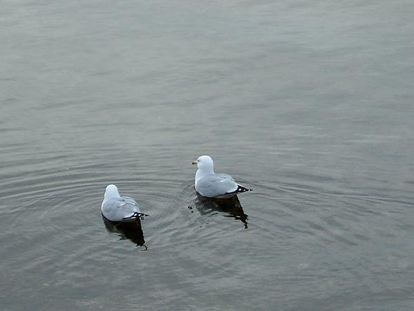 海鷗到處可見