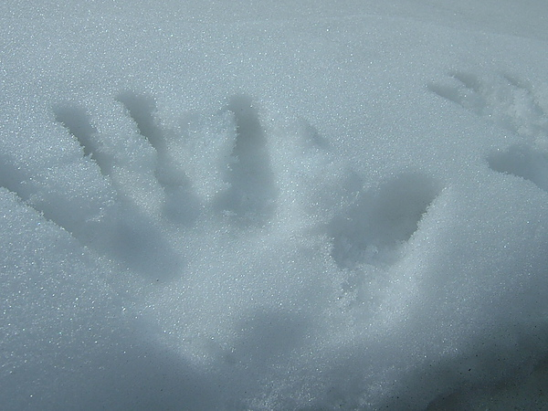 在雪地裡留下痕跡吧!