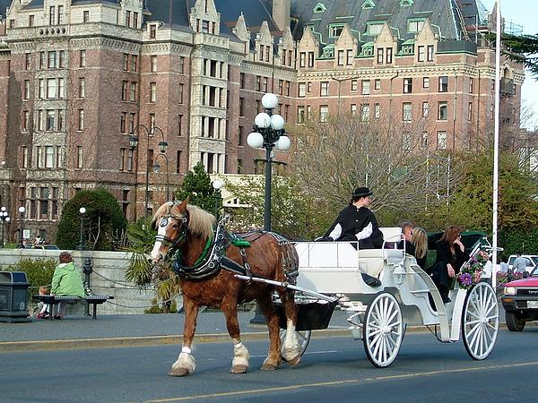 議會大廈前觀光馬車