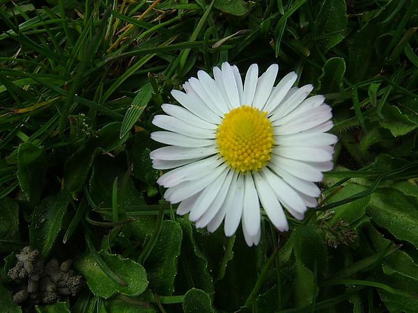 路邊到處可見美麗的野花