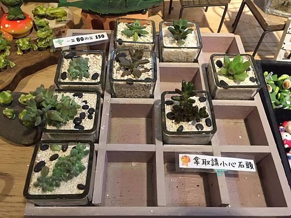1-6新北市鶯歌陶磁老街--Yuti佑莉多肉盆栽造景26.jpg