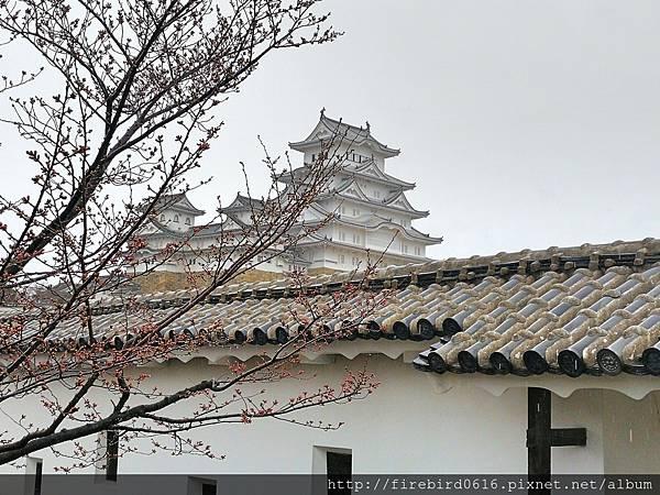 7日本自由行-姬路城61.jpg