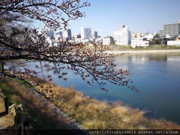 岡山後樂園-岡山城9.jpg