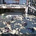 7大溪好時節農莊2.jpg