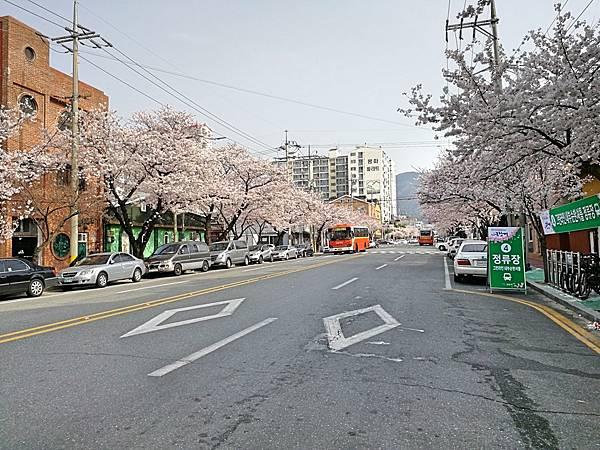 2釜山自由行Jinhae鎮海賞櫻1-21.jpg