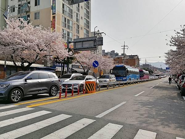2釜山自由行Jinhae鎮海賞櫻1-32.jpg