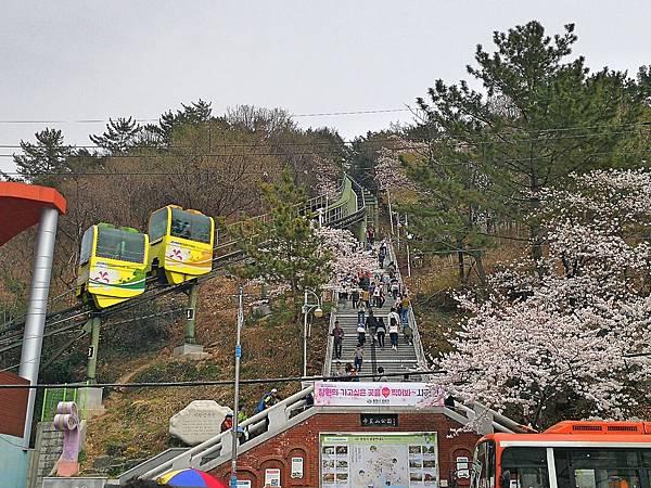 7釜山自由行Jinhae鎮海賞櫻2-52.jpg