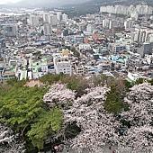 7釜山自由行Jinhae鎮海賞櫻2-59.jpg