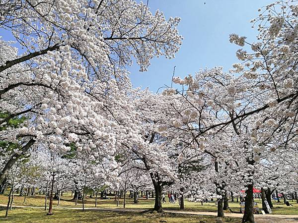 韓國慶州景點佛國寺-8.jpg