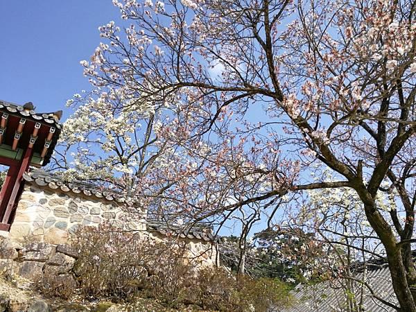 韓國慶州景點佛國寺-56.jpg