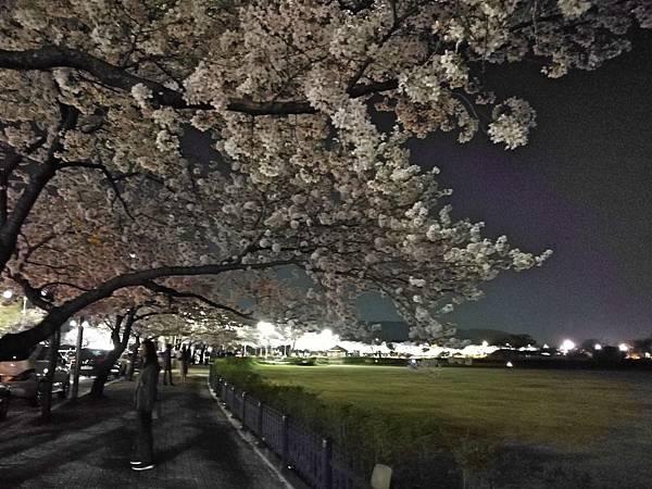 1韓國慶州自由行--市區古蹟18.jpg