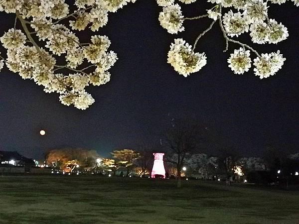1韓國慶州自由行--市區古蹟23.jpg