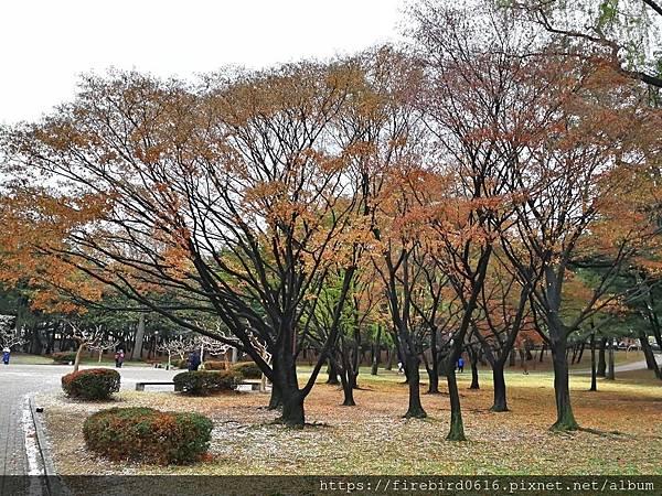 2韓國慶州自由行--市區古蹟46.jpg